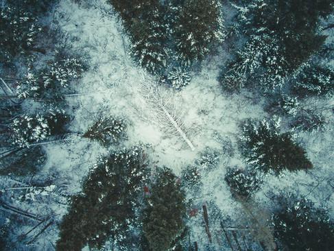 Fallen Tree-01.jpg