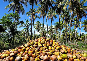 coconutoil-factory.jpg