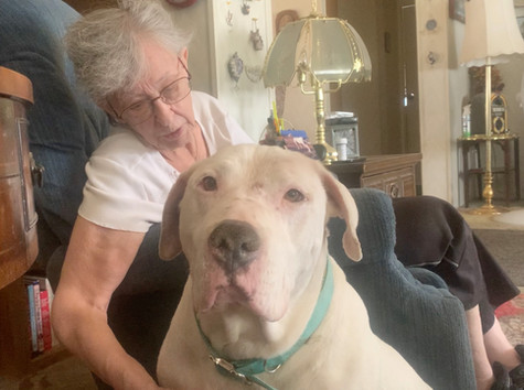 Reno Veterinary Animal Clinic to Help Seniors and Low Income with Their Pets
