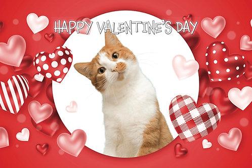 Happy Valentine's Day - Cat