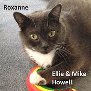 Roxanne tile 4x4 Eleanor and Michael How