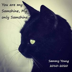 Sammy ver1 Stacey Young 12x12.jpg