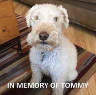 Tommy Krys Bart Tile 4x4.jpg