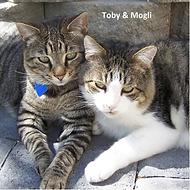 Toby Mogli tile 4x4.png