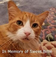 Billie on rug 2 cropped v3.jpg