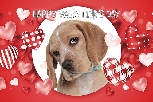Happy Valentine's Day - Dog