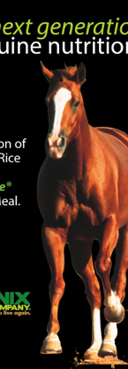 Renew Gold™ Non-GMO Equine Supplement