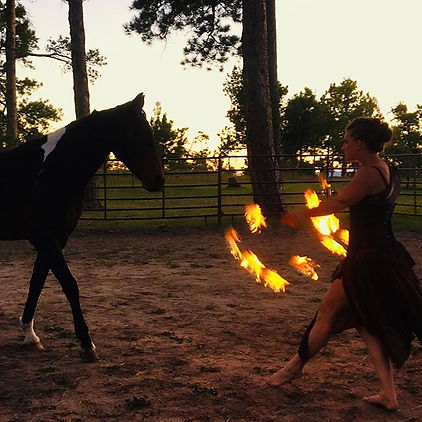 Fire Liberty Horse