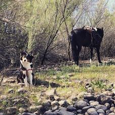Companions in nature