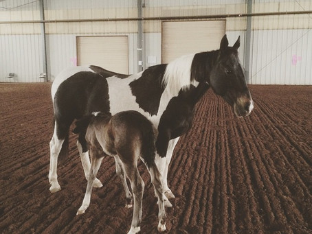 Gypsy Had Her Filly!