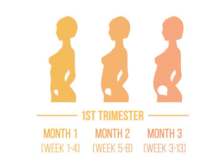 First Trimester Of Pregnancy