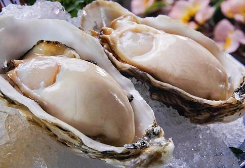 Oysters【12pcs】