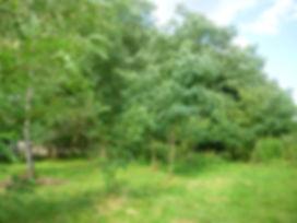 Robinienwäldchen