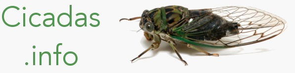 cicadas-info.jpg