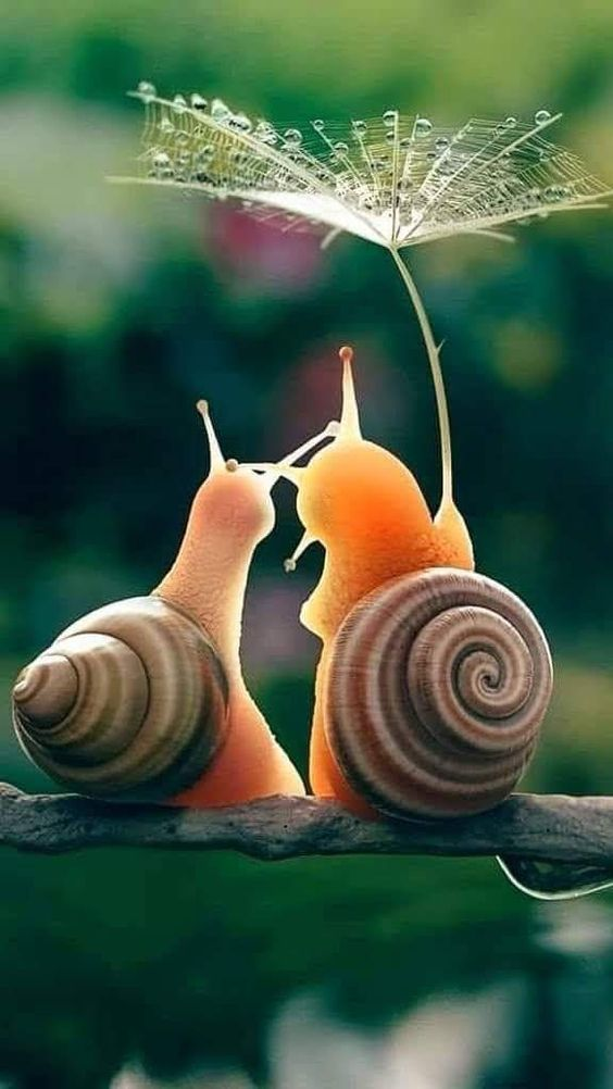 snail friends closeup.jpg