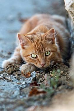 orange cat3.jpg