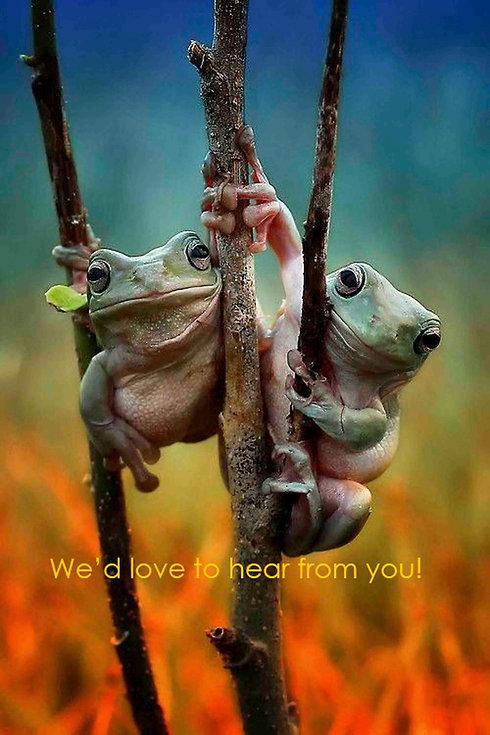 two frog friends copy.jpg