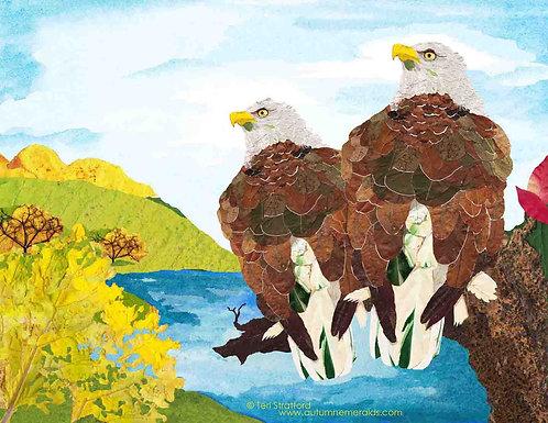 Bald Eagle Beauty