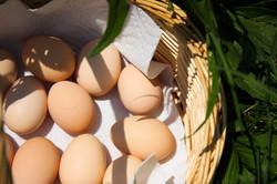 Eire Glen Fresh Eggs