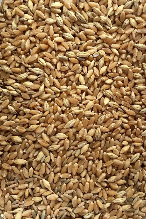 Organic Grass Seed Blend