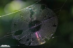 Spiderweb circle disk silver