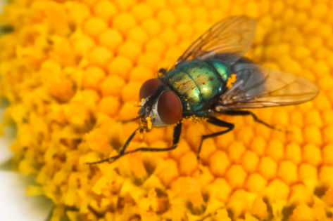 Fly macro flower