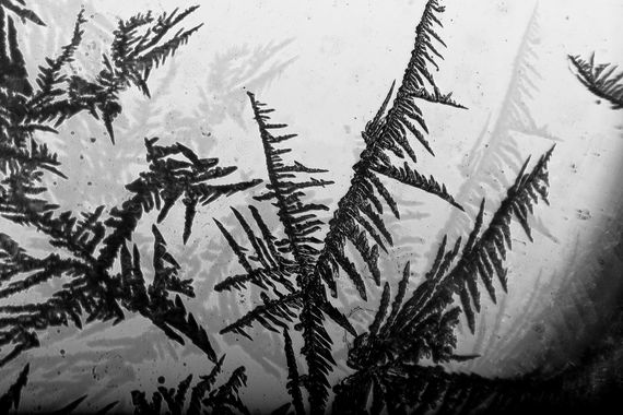 macro frost black and white