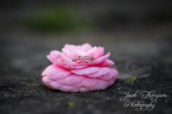 Flower ring macro