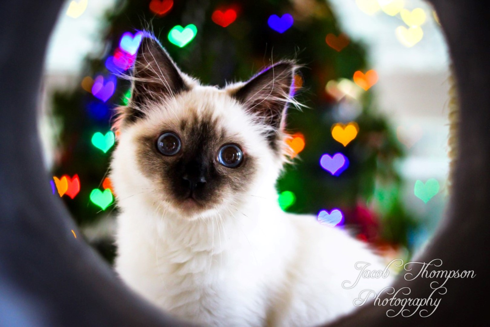 Kitten heart shaped bokeh background