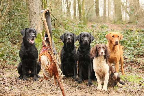 Group - The Gundog Masterclass at West Wycombe Estate
