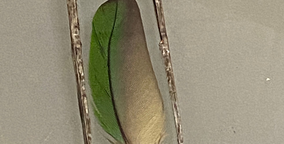 Green Excotic Bird Feather