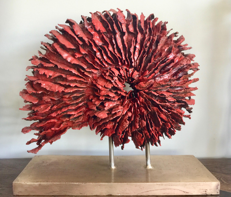 corallo nautilus rosso