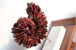 Corallo nautilus rosso piccolo