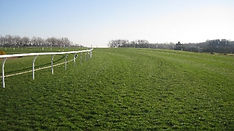 Turf grass nutrition & liquid fertilisers