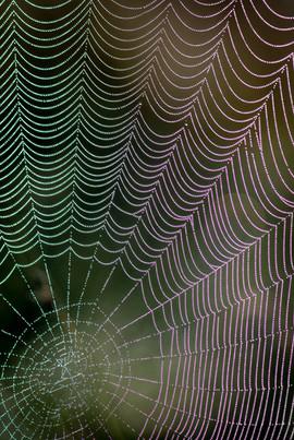 Web of Garden Spider