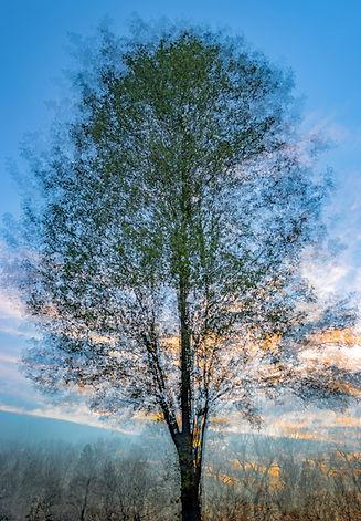 Tree impression1.jpg