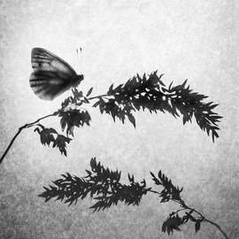 Shadows of Grass and Butterfly