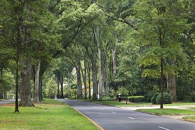 Myers Park, Charlotte, NC