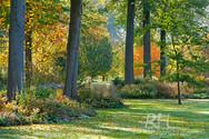 Arboretum_Wespelaar_01_-_België.jpg