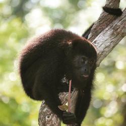 Happy Monkey Monday _blush_ - conservati