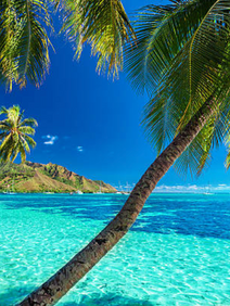 Mo'orea sourced as location for unforgettable President's Club