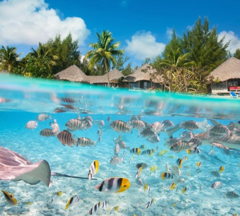 School of fish at incentive trip destination