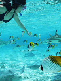 Snorkeling exursion managed for corporate group