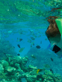 Tahiti snorkeling at company President's Club