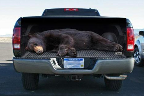 Full Size Black Bear Tailgate Wrap Decal
