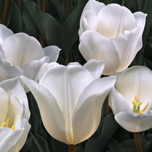 Nine White Tulips