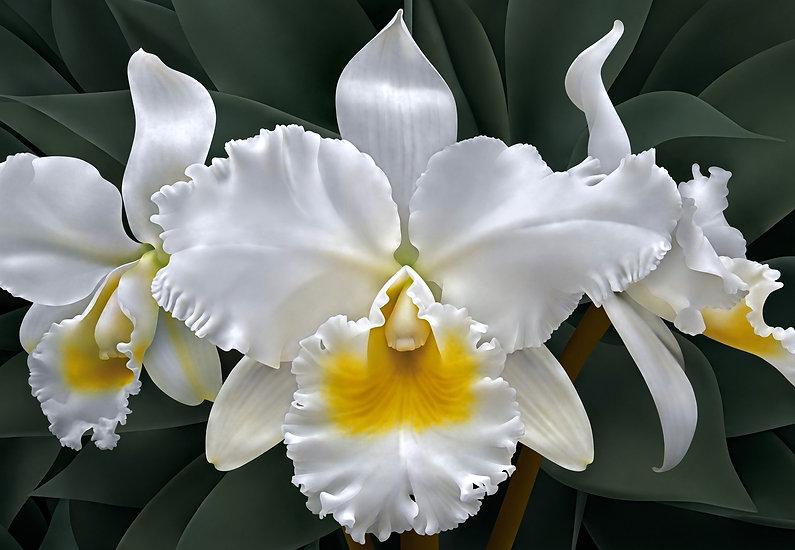 Three White Orchids.jpg