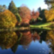 Hillandale reflections.jpg