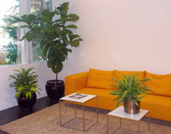 plantscapes_edited