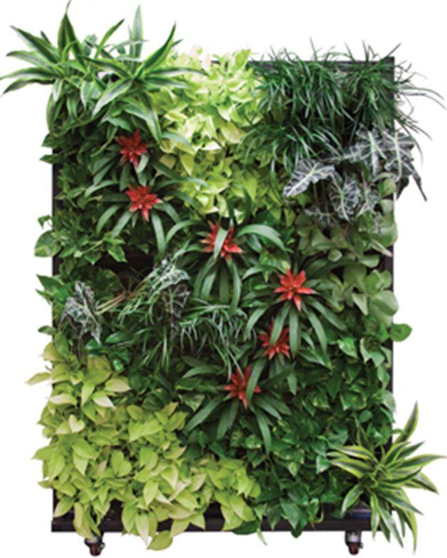 plantscape design